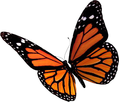 Monarch clipart in flight. Download free png flying