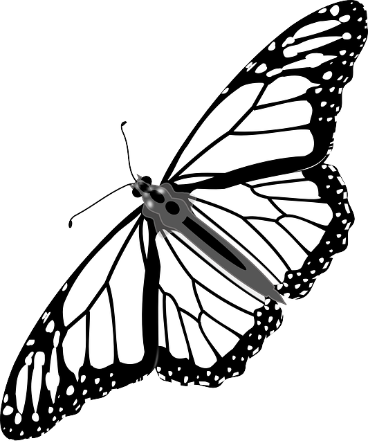Drawing insects butterfly. Free image on pixabay