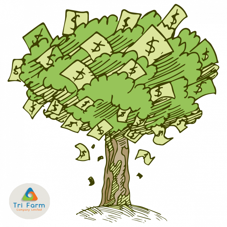 Money tree png. Introducing our newest product