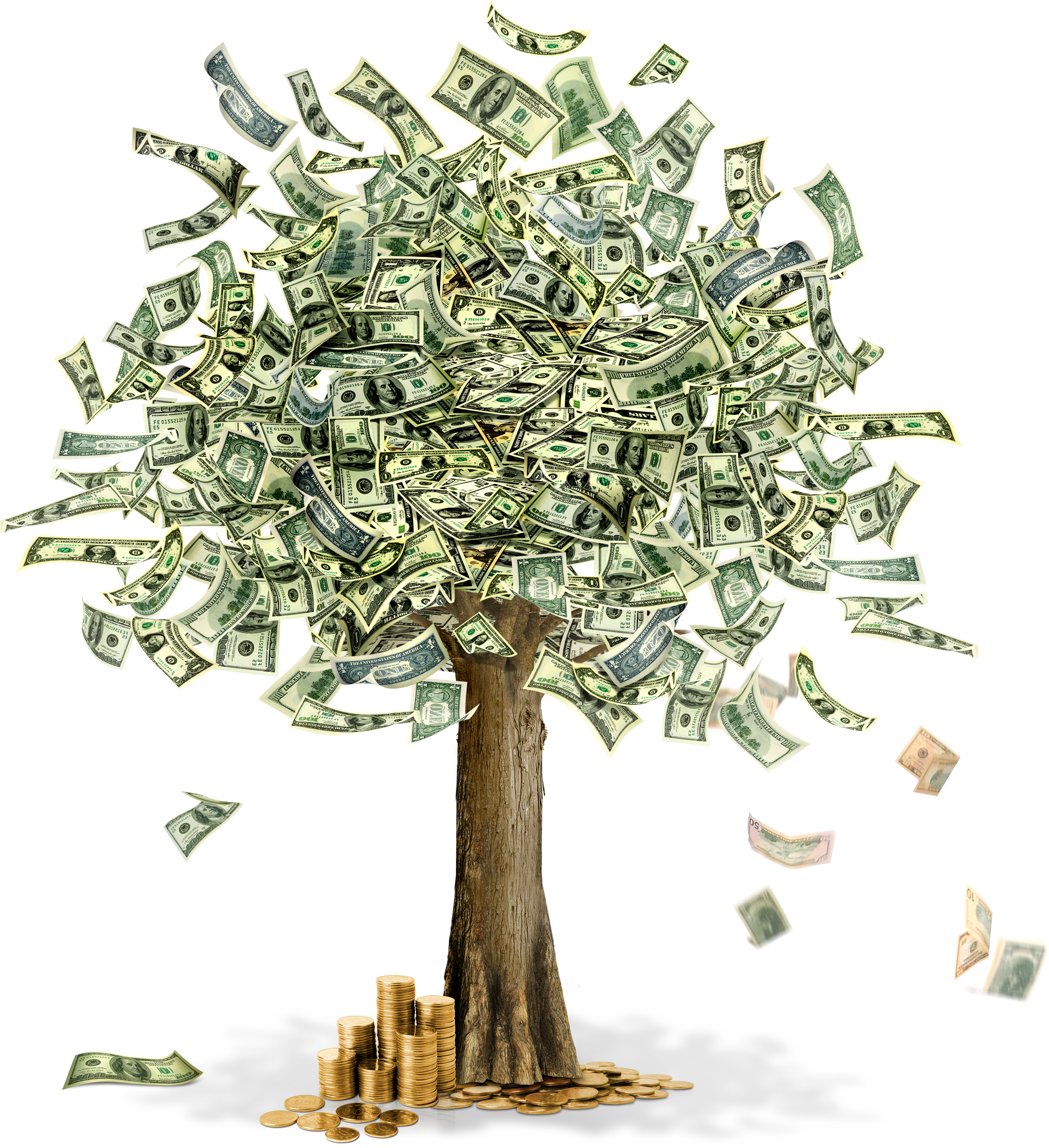 Money tree png. Image
