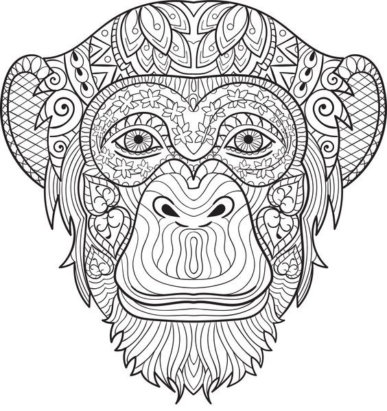 Monkey coloring for grown ups. Chimpanzee page pages free