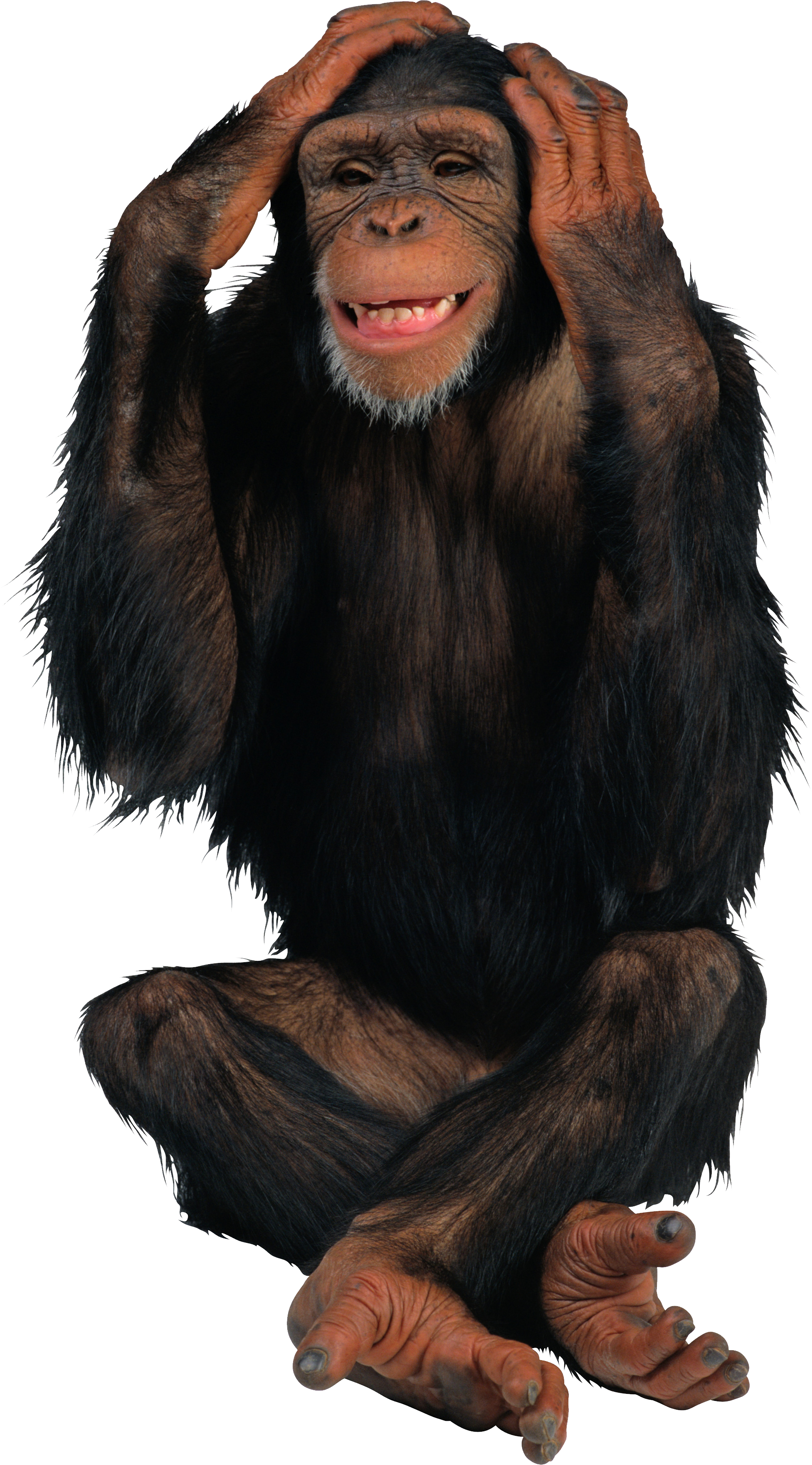 Images free download. Monkey png vector library library