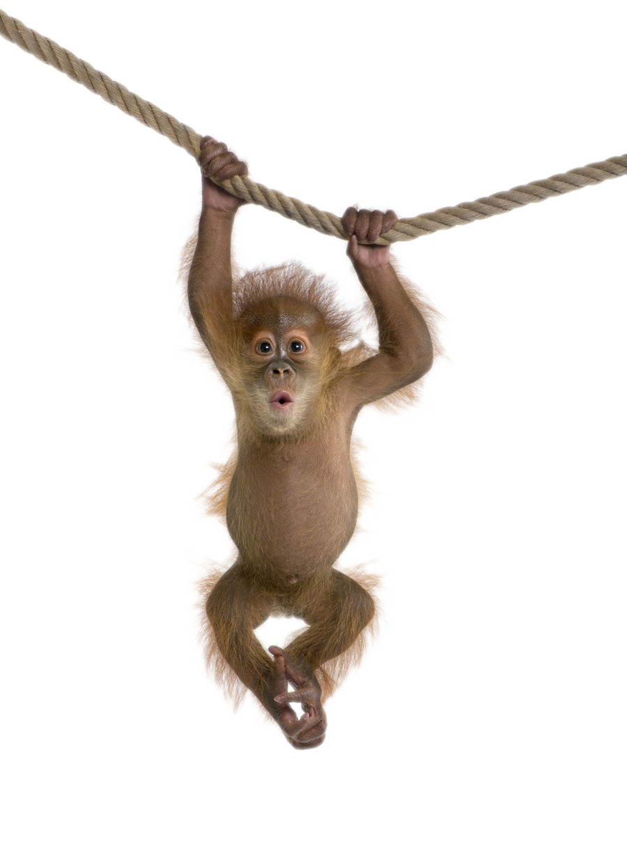 Transparent all free download. Monkey png images picture black and white download