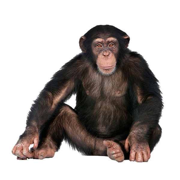Image without background web. Monkey png png black and white download