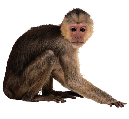 Animal pinterest. Monkey png clip freeuse library