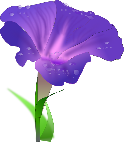 Morning drawing glory. Flower clip art at