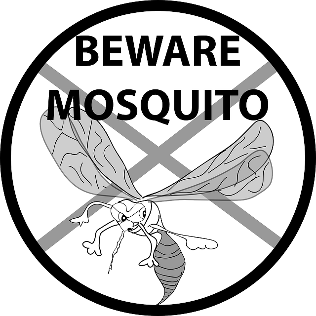 vector mosquitoes sand