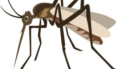 Mosquito clipart. Cilpart crafty animals free