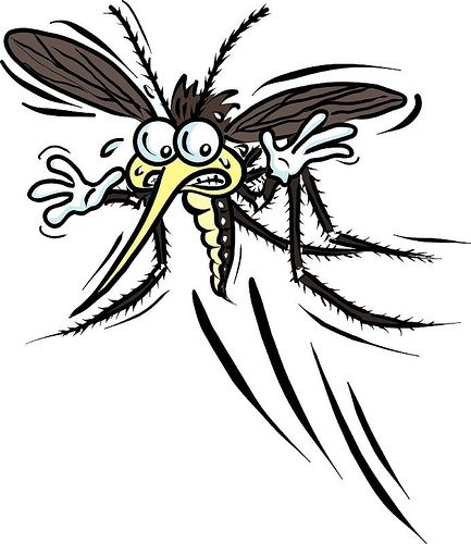 Mosquito clipart dead mosquito. Best images on