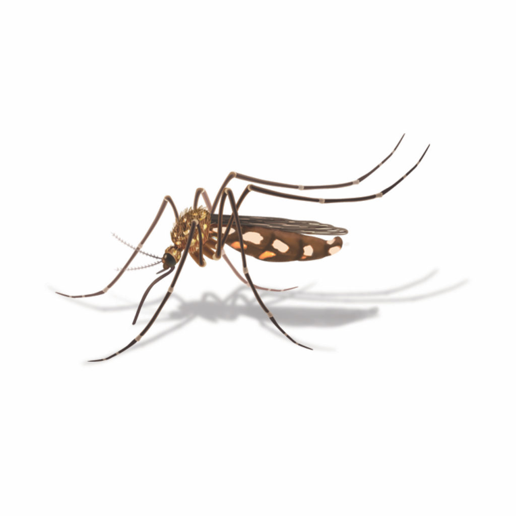 Mosquito clipart heartworm. Just get those mosquitoes
