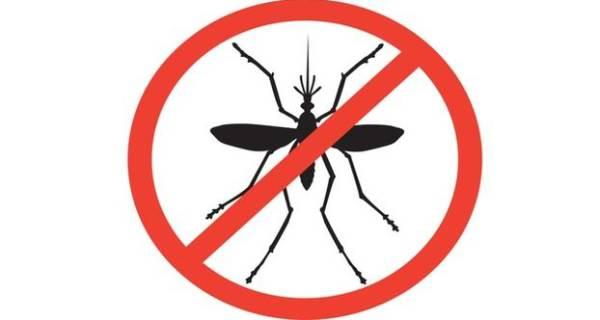 mosquito clipart prevention disease