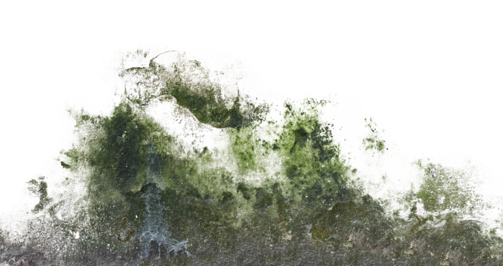 Moss texture png. Decals for paragon stinkyipod