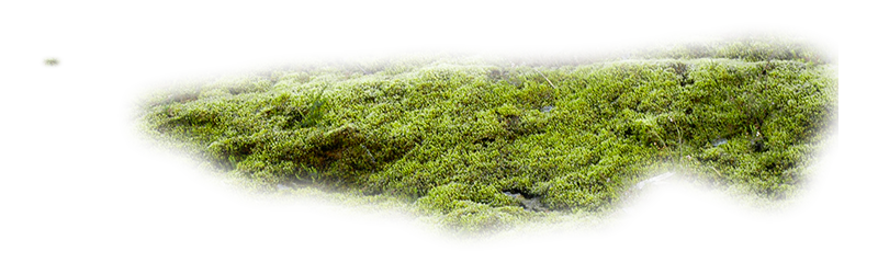 Moss texture png. Index of mapping terrain