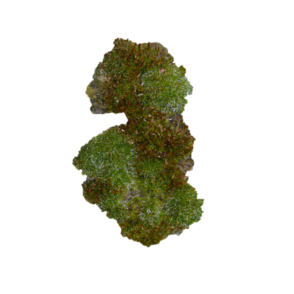 Moss texture png. Masked decal image roblox