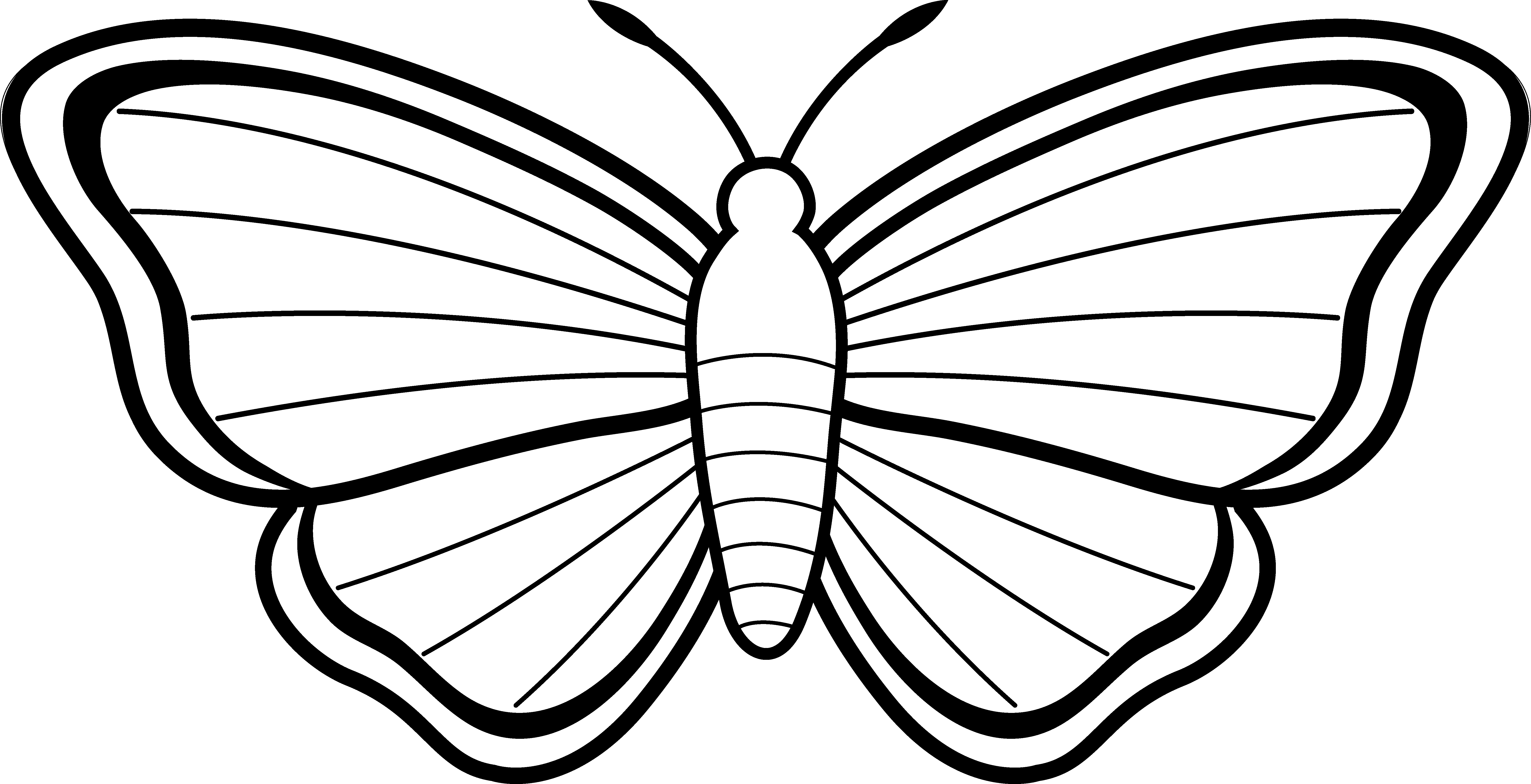 Moth drawing at getdrawings. 3 clipart butterfly jpg black and white library