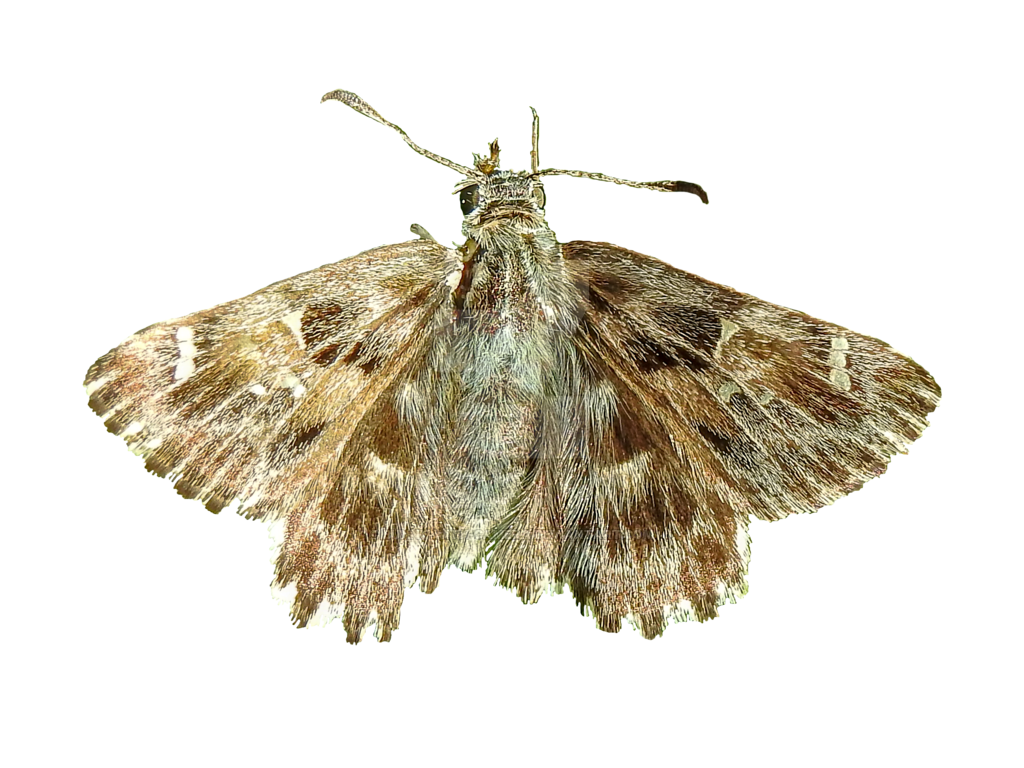 Moth png. By bunny with camera