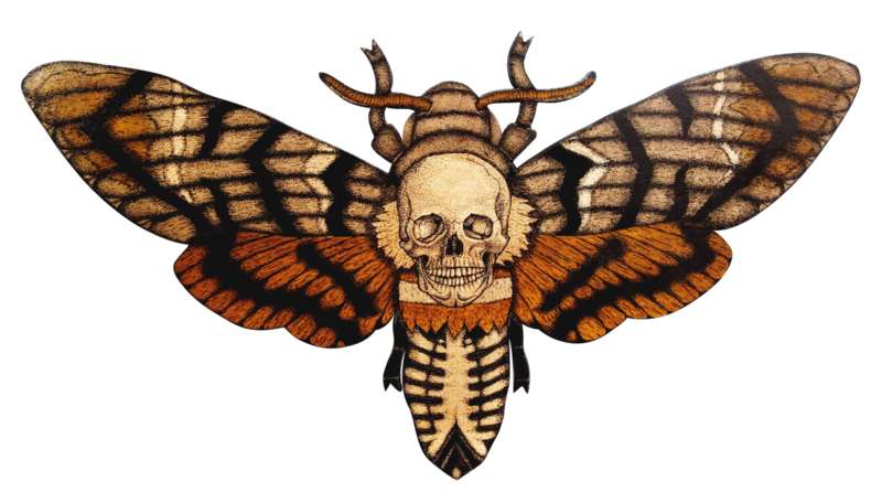 Transparent moth different. Download free png hd