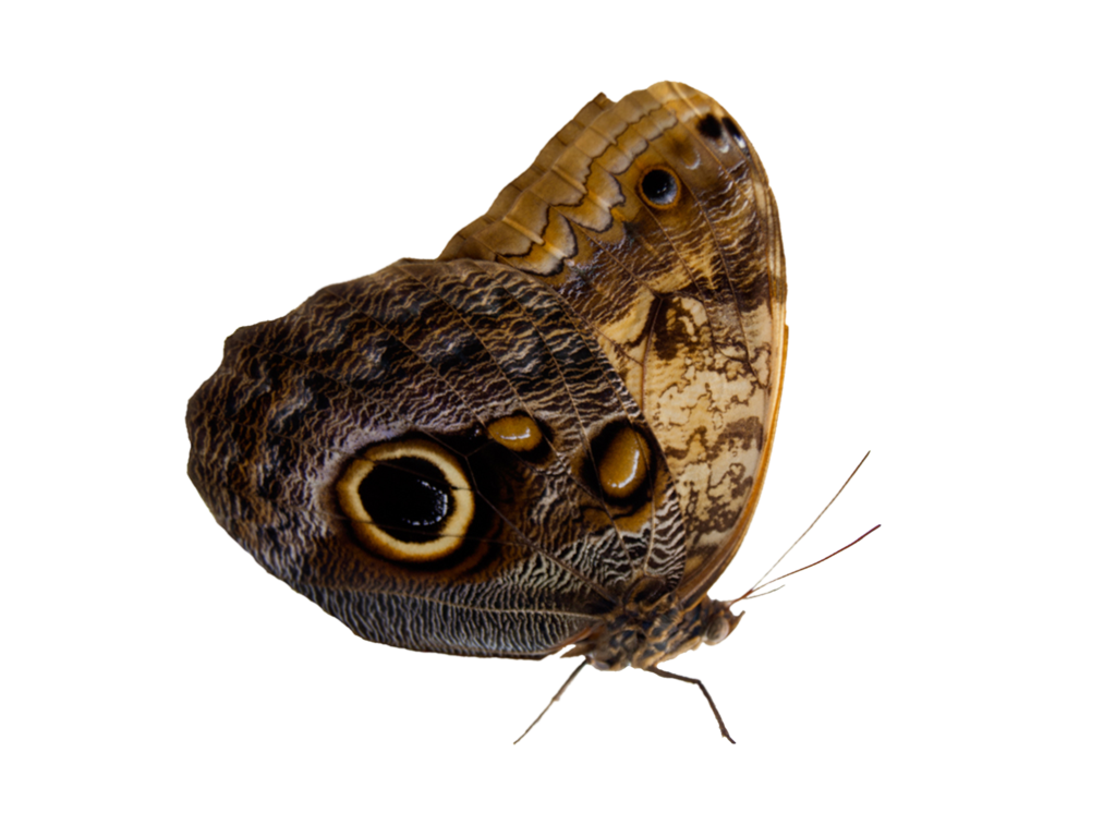 Moth png. Pre cut by moonglowlilly