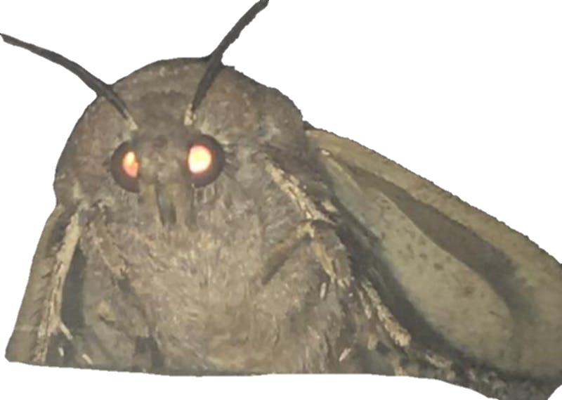 Moth png. Get in quick before
