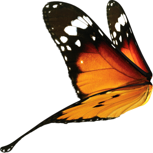 Moth wings png. Butterfly by doloresminette on