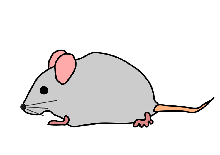 Mouse clip rodent. To a hit the