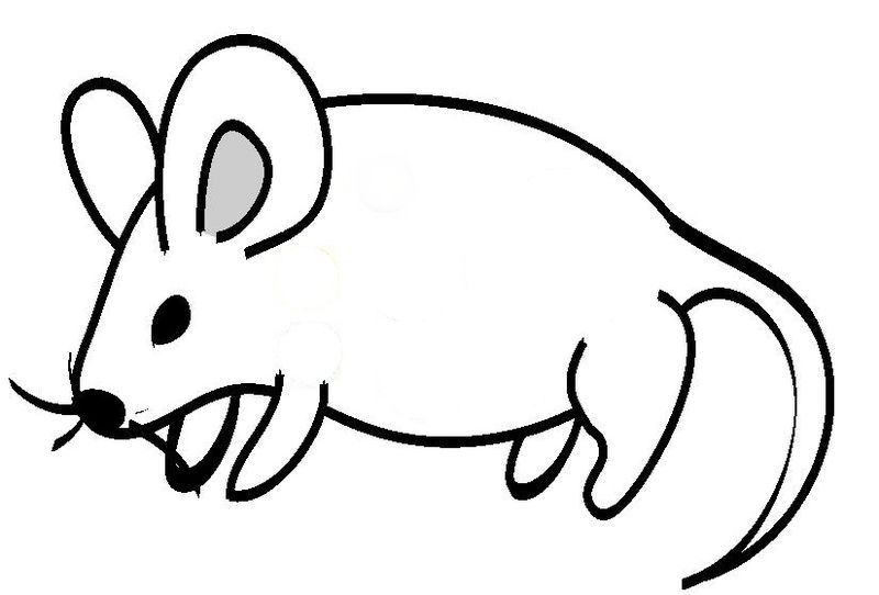 Mouse clipart. While little png