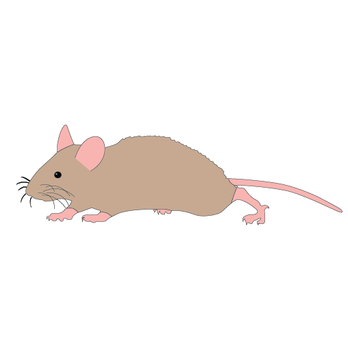 Mouse clipart. Free animal cliparts download