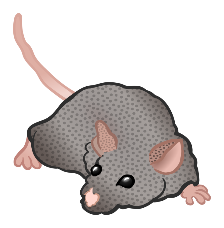 Mouse clipart rodent. Computer rat icons free