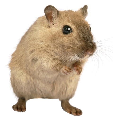 Mouse png. Rat transparent image pngpix