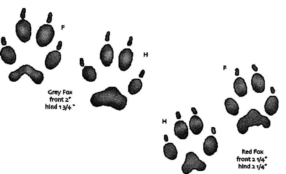Mud tracks png. Identifying pest animals by