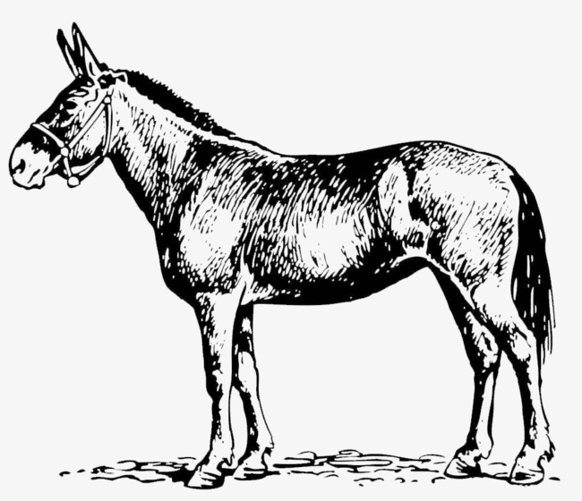 Mule clipart black and white. A line an animal