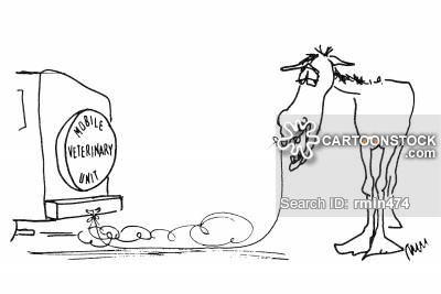 Mule clipart horse tooth. Loose cartoons and comics
