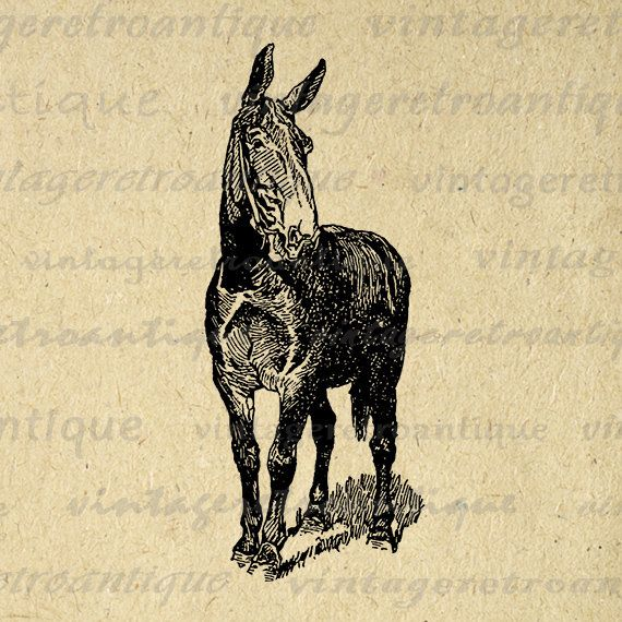 Mule clipart printable. Horse graphic download donkey