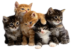 Multiple cats png. Can male mate with