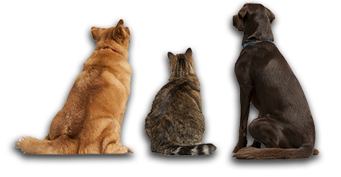 Multiple cats png. Veterinary services richmond home