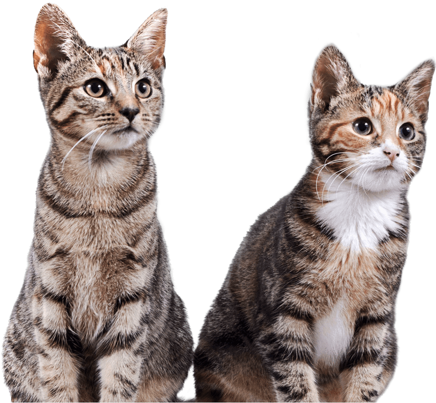Multiple cats png. Prettylitter health monitoring cat