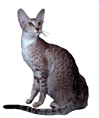 Multiple cats png. Raw meat grain free