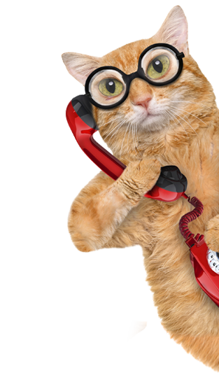 Multiple cats png. Pawz with us a
