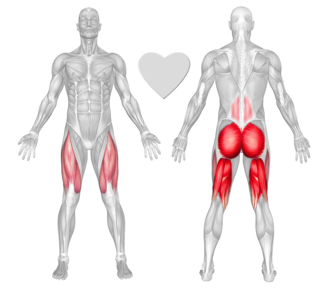 Anatomical muscle stretching png. Buttocks exercises workouts freetrainers