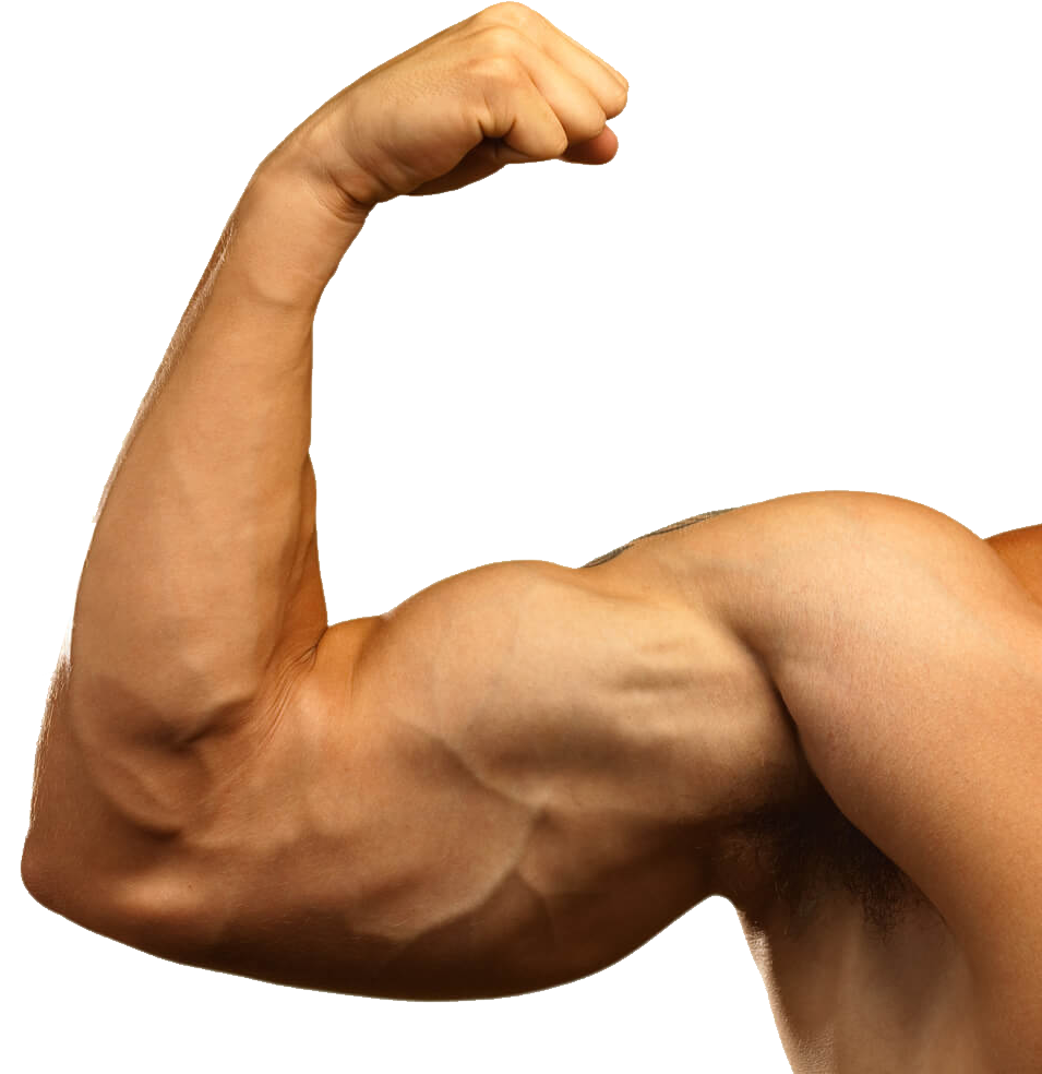Muscle arm png. Image purepng free transparent