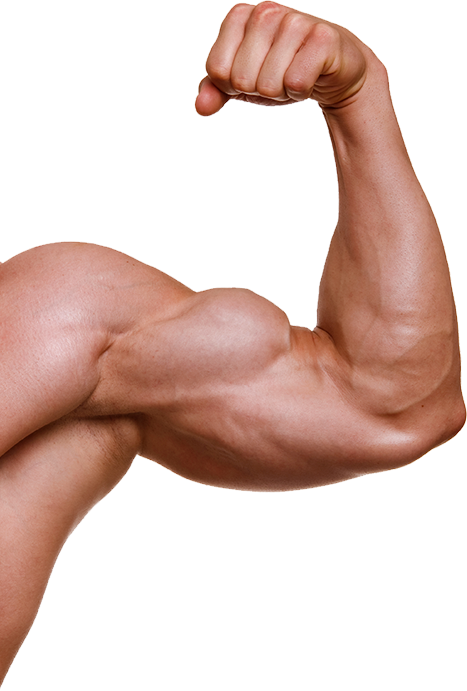 Transparent muscles hand. Muscle arm png image