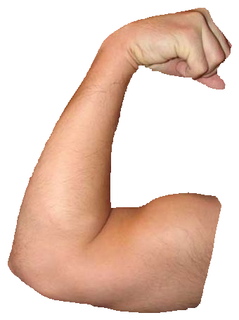 Muscle arms png. Download hd arm transparent