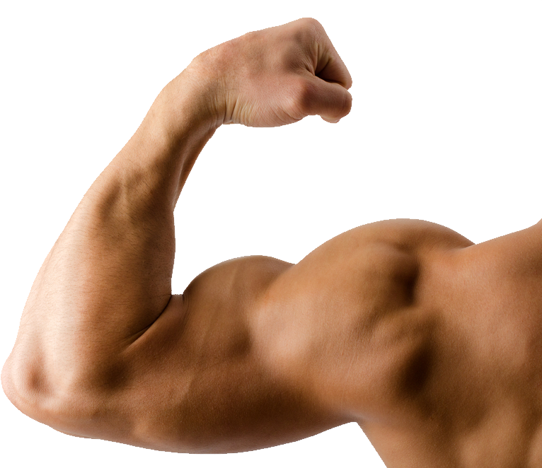 biceps drawing male arm muscle