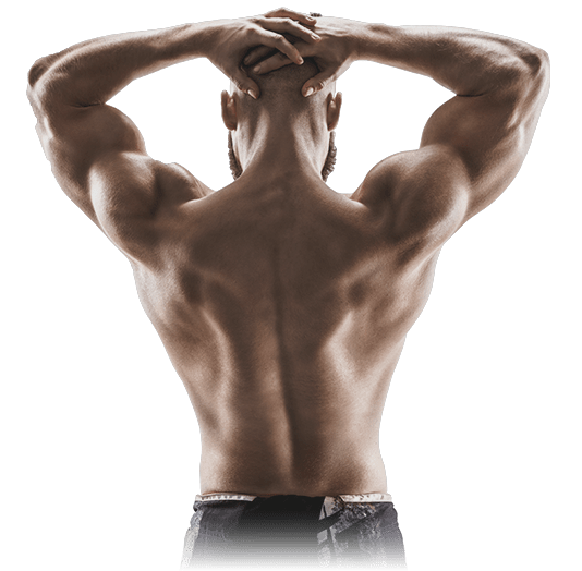 Transparent muscles back. Tens units ems muscle