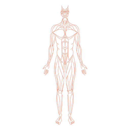 transparent muscles body diagram