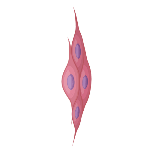 Muscle cell png