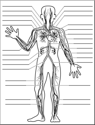 Muscle clipart unlabeled. Clip art human anatomy