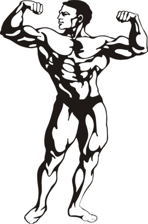 Muscles clipart. Free muscle person cliparts