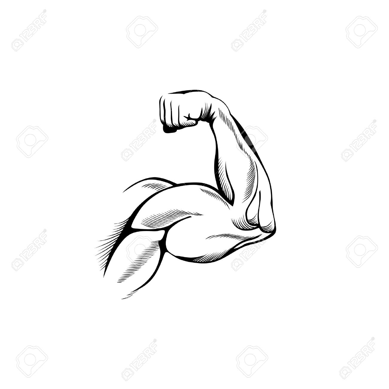 Muscles clipart drawing arm. Muscle at getdrawings com
