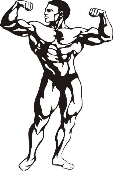 Muscles clipart masculine. Bodybuilder panda free images